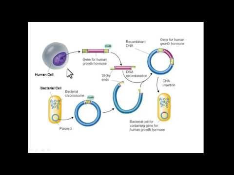 Recombinant DNA Technology--- a nice explanation from down under.