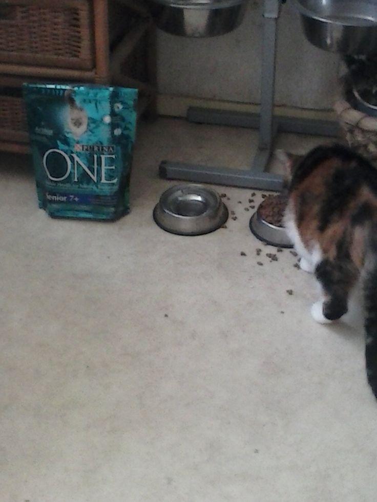 Heathcliff, test de Purina-one senior. Ook zij vindt het erg lekker, maar helaas, veel drinken en al na 4 dagen kreeg ze problemen met sturviet-vorming, iets wat ze met haar eigen, voer (GEEN DIEET VOER!!!) niet heeft.  Erg zout!