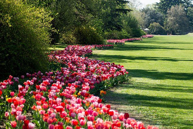 """""""La fioritura più bella d'Italia"""", secondo gli italiani, è quella del Parco Giardino Sigurtà (Valeggio sul Mincio, VR)!! Il milione di tulipani di Tulipanomania sono stati i vincitori del sondaggio tra i visitatori lanciato dal network #ilparcopiubello per la prima edizione del Premio """"La fioritura più bella d'Italia"""". Grazie a tutti voi che avete votato!!!"""