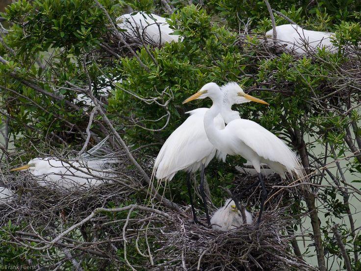 Nesting Season - Little St. Simons Island, Georgia