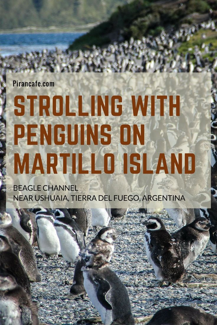 Strolling With Penguins at the bottom of the world on Martillo Island on Argentina's Tierra de Fuego. Fully updated for 2017.