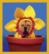 Flower Pot Dog #06138