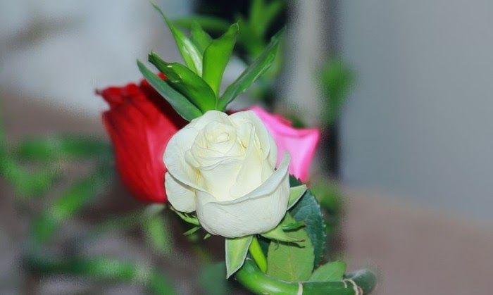 Gambar Bunga Ros Yg Cantik Dan Tentu Saja Bunga Mawar Merah Adalah Yang 70 Gambar Foto Bunga Rose Paling Cantik Jika Anda S Gambar Bunga Bunga Menanam Bunga