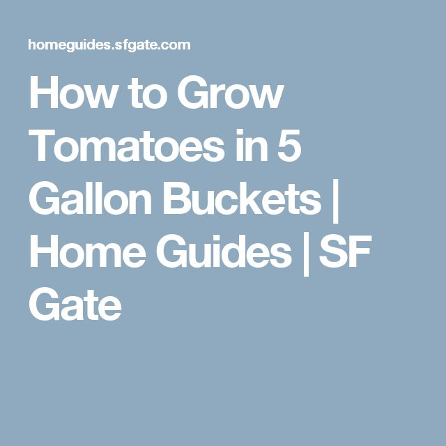 How To Grow Tomatoes In 5 Gallon Buckets How To Make Pie 400 x 300