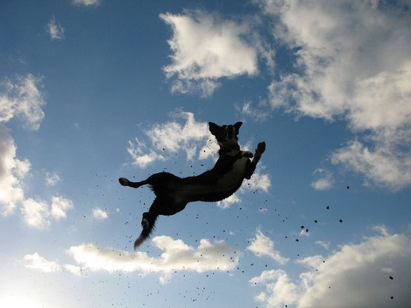 The Best Flying Dog Ideas On Pinterest Dog Pounds Happy Lab - Hilarious photographs dogs floating mid air