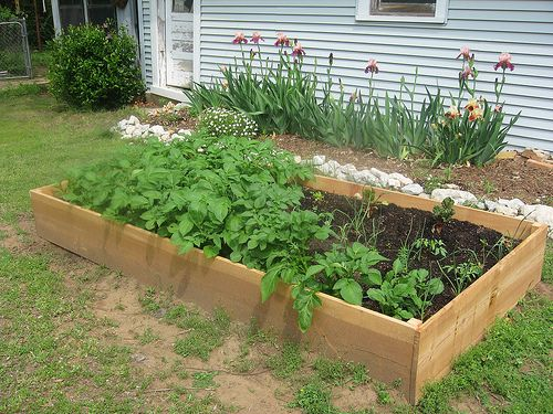 Building raised garden beds gardens wood beds and framing materials for Best material for raised garden beds