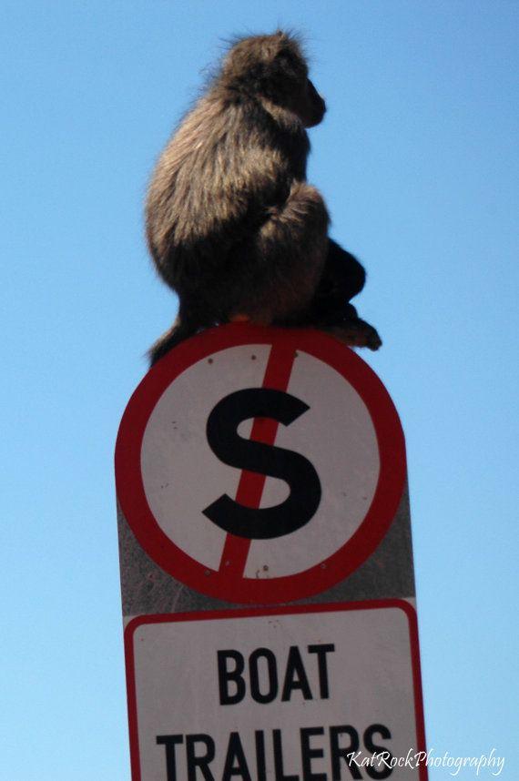 Beware Baboon by KatRockCreations on Etsy, €12.00