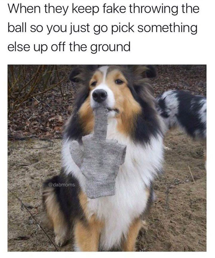 Animal Pictures Memes that will Make You Smile - 2
