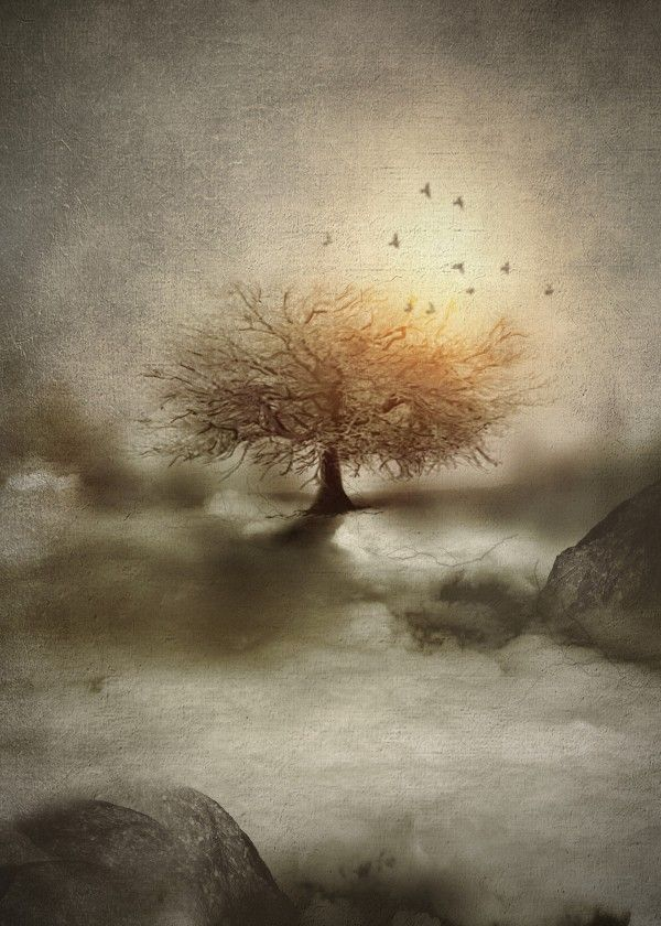Lone Tree Love IV