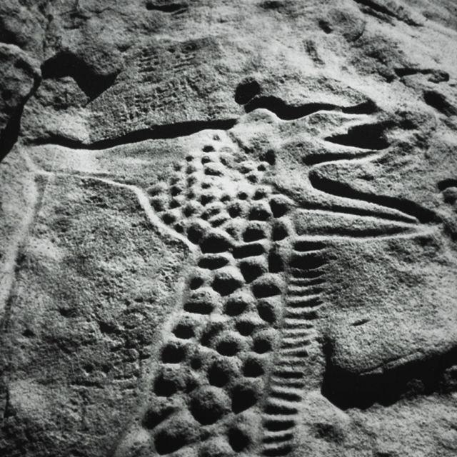 the worlds largest rock art petroglyph dabous giraffe - 640×640