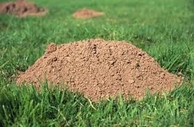 that's some high quality dirt!