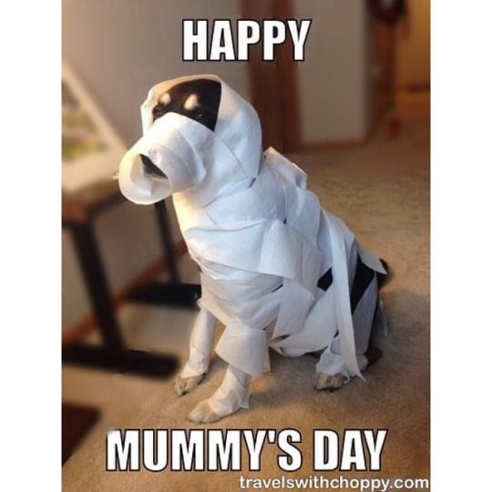 Funny Meme For Mothers Day : Best ideas about happy mothers day meme on pinterest