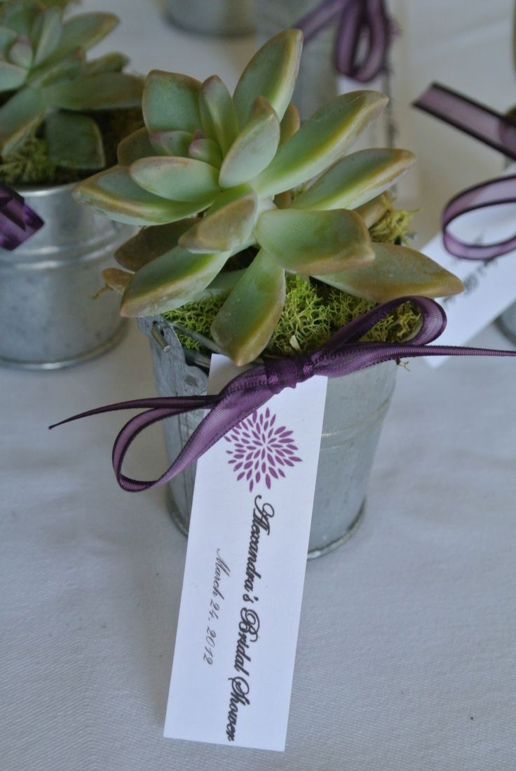 bridal shower favors?  @princess Alvarez :) saw this and thought of you we LOVE succulents