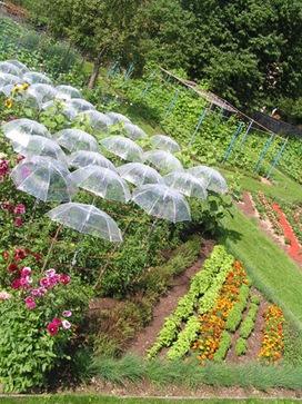 Jardin potager - Parc de Wesserling - Ecomusée Textile