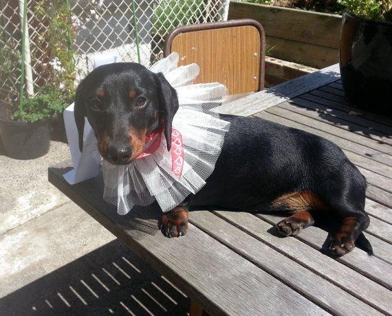 Valentines Day dog tutu. White dog wedding tutu dog by GrannyJack
