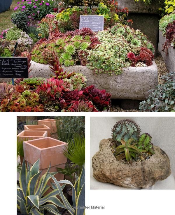 226 best images about retail plant displays on pinterest gardens window boxes and succulent - Succulent container gardens debra lee baldwin ...