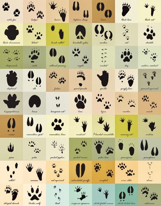 43c46ea91b5e2 Different types of animal paw prints you could use to draw with henna paste  🐾 www.laminau.com laminau henna stencil kits and henna stencils 6 in 1  Henna ...