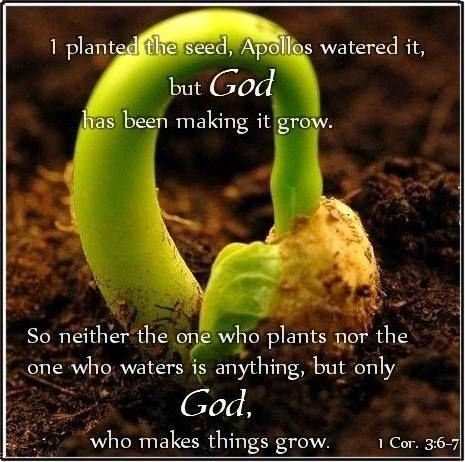 How plants grow 60