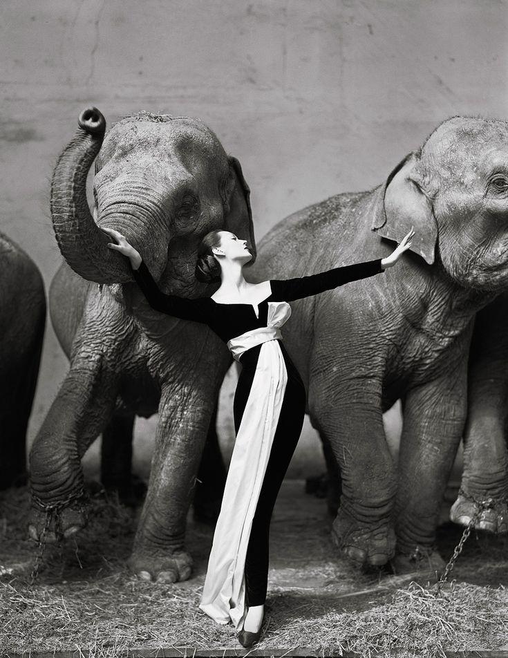 Richard Avedon. Dovima with Elephants.