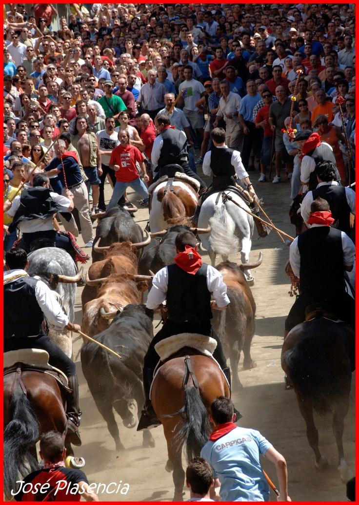 Entrada de toros y caballos. Segorbe. Spain.