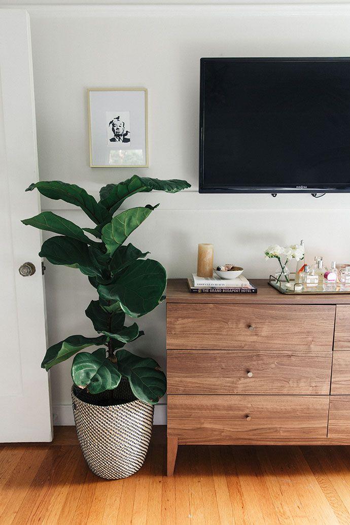 rack da sala de estar, plantas