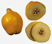 Ayvanın meyvesi, yaprakları ve çiçekleri gibi çekirdekleri de şifalıdır. Eski çağlardan beri bilinen bu özelliğini Romalılar oldukça iyi değerlendirmiş; parfümden bala kadar her şeyin içinde ayvayı kullanmışlardır. Ayvanın çekirdekleri birçok şekilde kullanılabilir: Çocuk ishallerinde 5-6 gr çekirdek 1 bardak suda 15-20 dakika kaynatılıp içirilir. Aynı şekilde hazırlanıp gargara yapılırsa boğazdaki ağrı, kızarıklık ve gıcık …