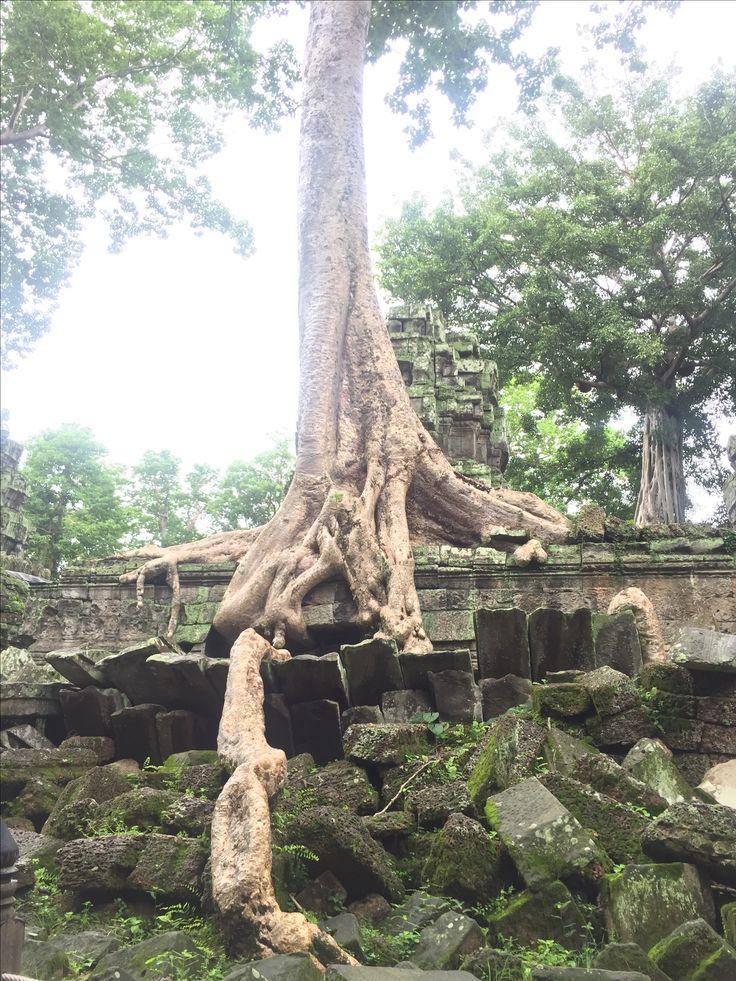 Ta Prohm, Siem Reap, Cambodia (Tomb Raider Temple)