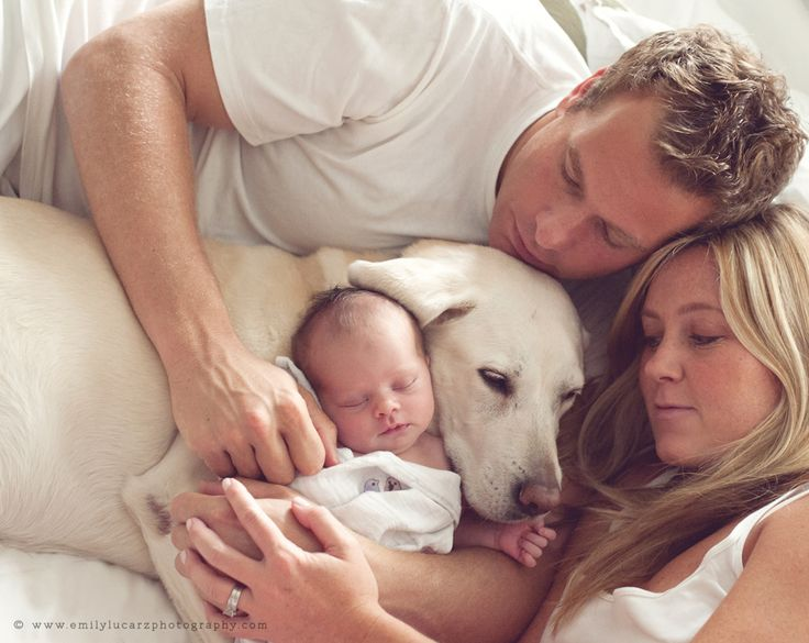 newborn with dog.  We'd have to fit two goldens in there though, not just one lab...