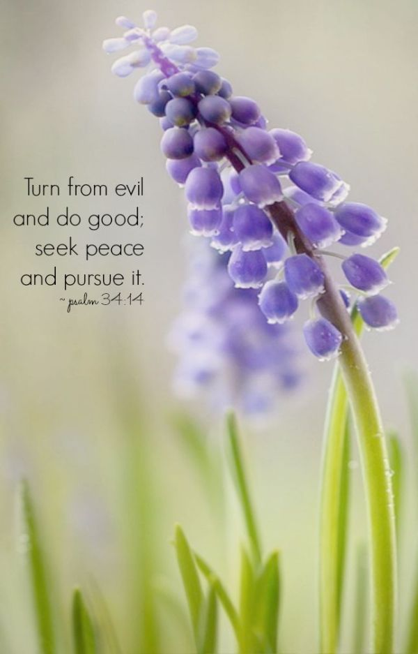 Depart from evil, and do good; seek peace, and pursue it. ~Psalm 34:14 KJV~