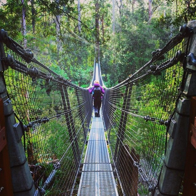 The swing bridge across the Huon River at the Tahune Airwalk in southern…