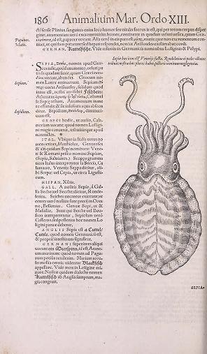 Conr. Gesneri Tigurini medicinæ et philosophiae professoris in Schola Tigurina, Historiæ animalium liber II : - Biodiversity Heritage Library