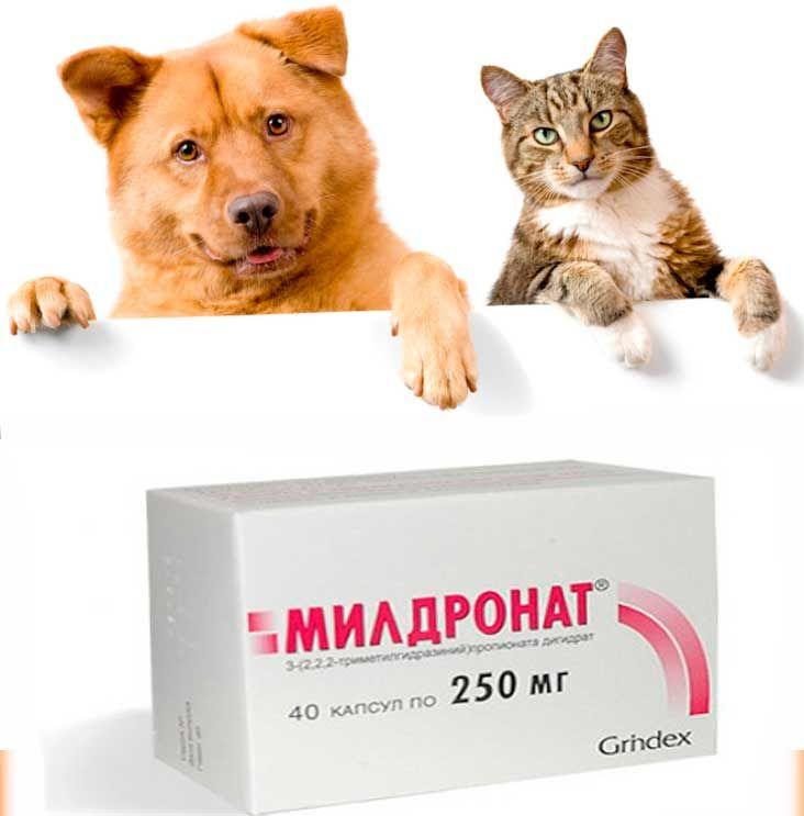 Способ применения - внутривенно, перорально, ретробульбарно, внутримышечно Активный фармацевтический ингредиент: мельдоний, триметилгидразиния пропионата дигидрат