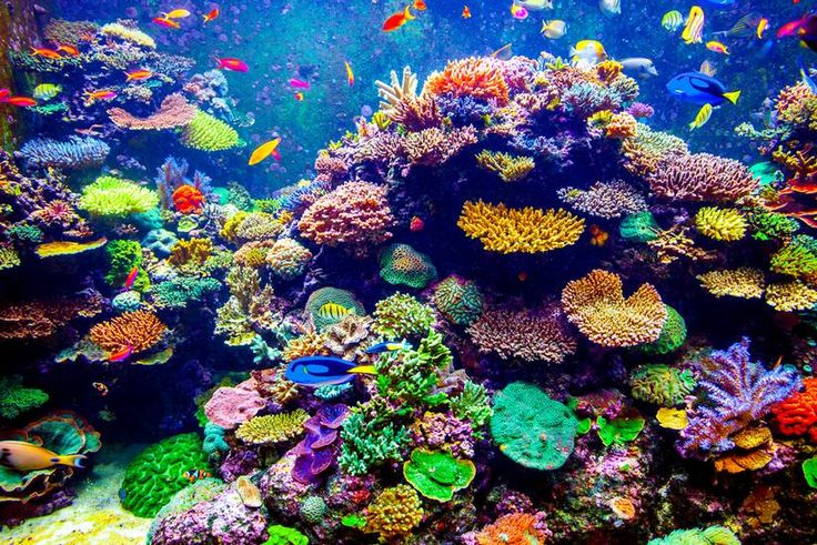 Colorful coral reef found near the surface of the ocean is common, but to find it at greater depths is rare. More