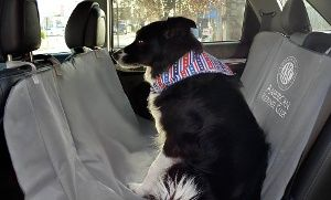 American Kennel Club Water-Resistant Car-Seat Cover