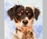 Check out Jasmine's profile on AllPaws.com and help her get adopted! Jasmine is an adorable Dog that needs a new home. https://www.allpaws.com/adopt-a-dog/english-setter/5649690?social_ref=pinterest