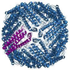 Ferritina Ferritina, uma proteína globular, é a principal proteína que contem as reservas de ferro do organismo humano. A concen...