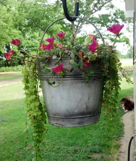 Antique bucket with flowers! :) you can garden in just about any type of container new or even old vintage containers