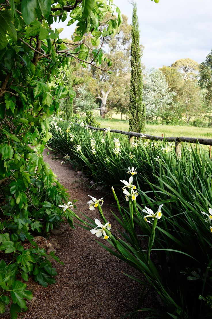 A pathway flanked by irises at Al Rhu Farm in One Tree Hill, a town on the outskirts of the Barossa Valley. Photography: Brigid Arnott | Story: Australian House & Garden