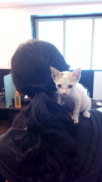 Look at me I'm a parrot. #cats #catlogic #kitten
