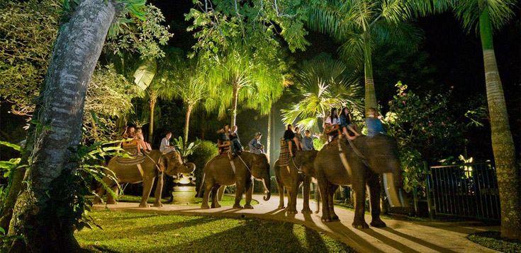 Ночное Сафари,  экскурсии на бали, бали экскурсии, экскурсии бали, экскурсии на бали цены, экскурсия бали, экскурсия на бали, стоимость экскурсий на бали, остров бали экскурсии, экскурсии бали индонезия, экскурсии на острове бали, экскурсии по индонезии, отдых на бали экскурсии, бали ява экскурсии, трансфер на бали, бали, серфинг, дайвинг, круизы, рафтинг, рыбалка, сафари парк, сафари на бали,  экскурсии на комодо и флорес  http://balilive.ru/excursions/nochnoe-safari-14.html