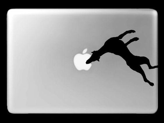 jumping doberman - Sök på Google