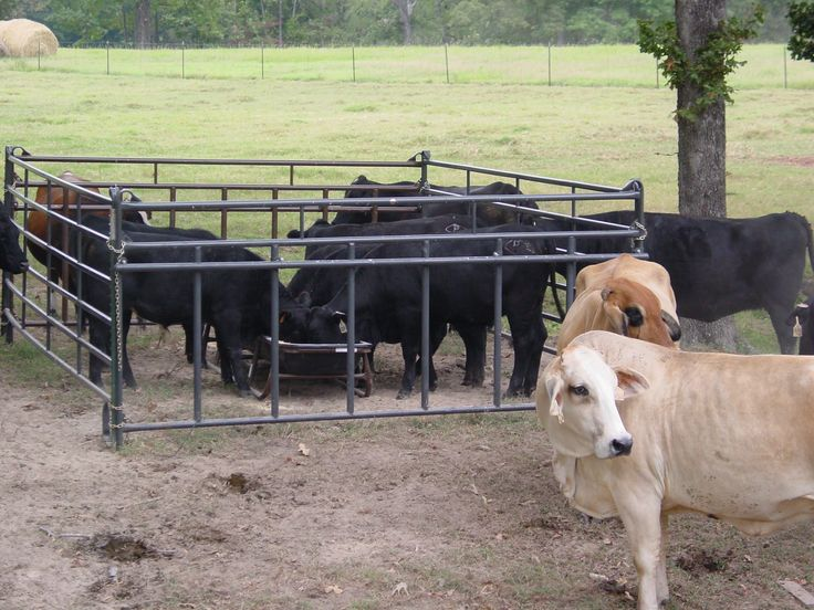 These powder-coated 12' panels feature an adjustable bar height to allow calves to pass through to the feeder while keeping out mature cows.