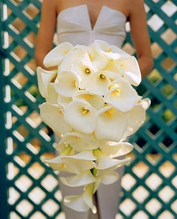 Lovely wedding flower white callalily cascade bouquet. Wow, what a bouquet! Would live this with the black callalily.