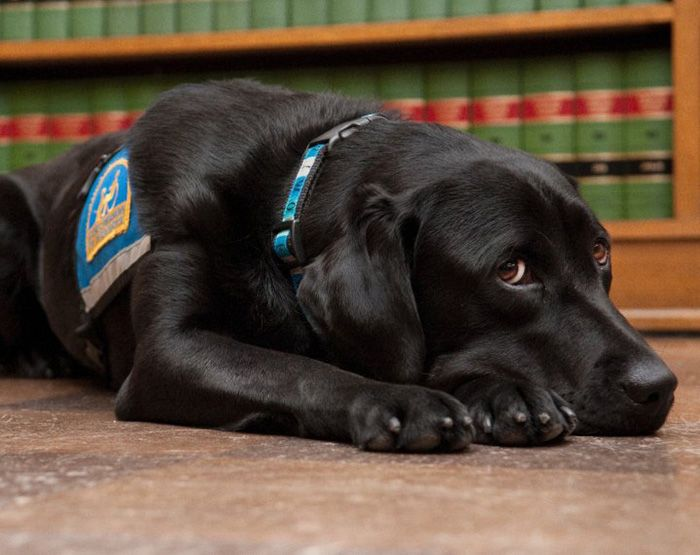 Public speaking is stressful, and testifying in court can be particularly so. In countries where defendants have the right to confront their accusers, witnesses, especially young ones, often struggle under the pressure. Ellen O'Neill Stephens and Celeste Walsen, of Courthouse Dogs, believe they have the solution: dogs in the courtroom to comfort witnesses.