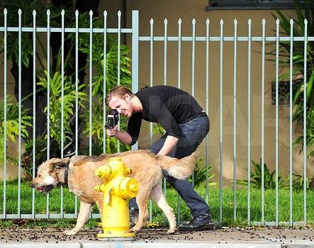 Ryan Gosling And His Dog On The Internet