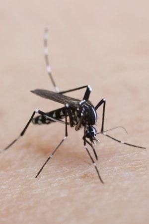 Que faire en cas de piqûre de moustique tigre ? : Bobos de l'été : même pas mal…