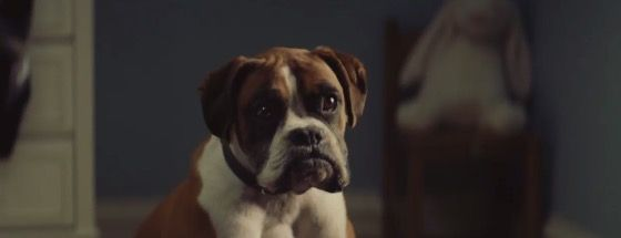 A new clip reportedly from the John Lewis Christmas advert has been released  - countryliving.co.uk