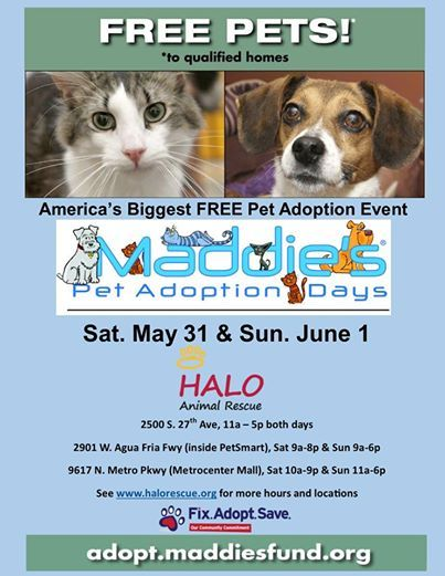 Más de 25 ideas increíbles sobre Free pet adoption en Pinterest - lost dog flyer template word