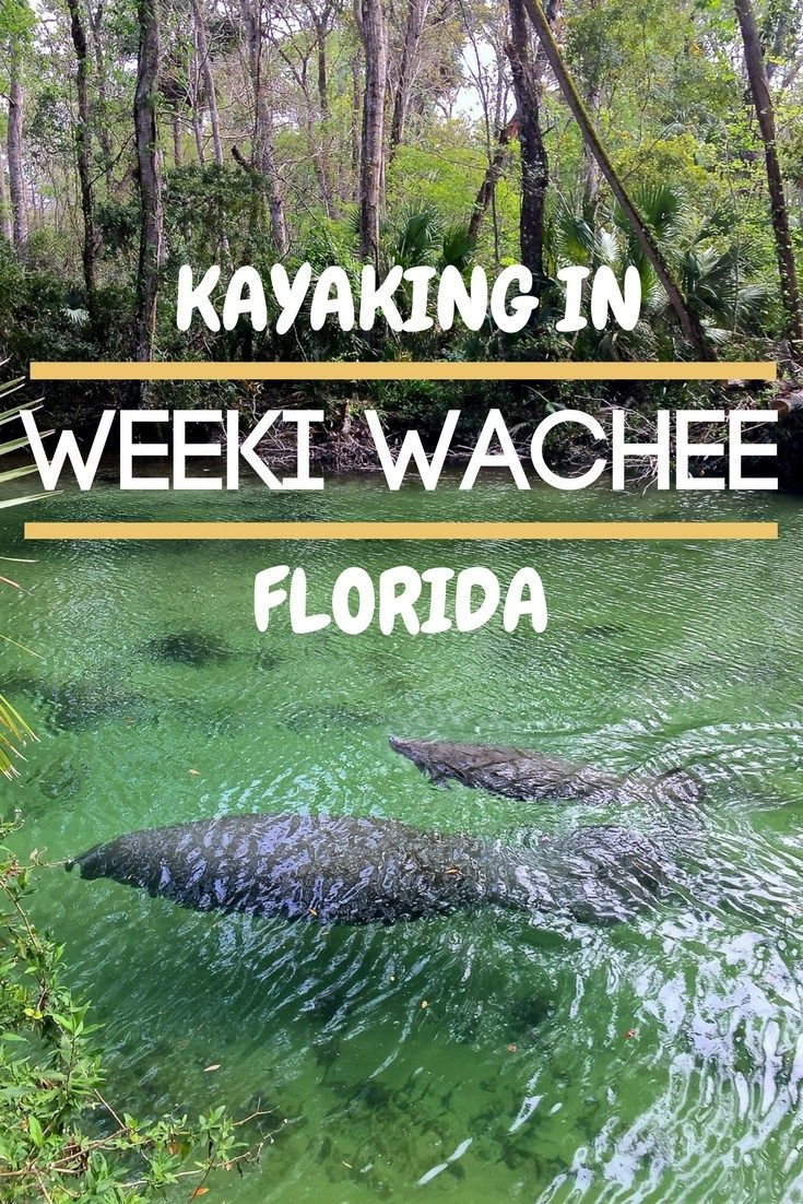 Weeki Wachee is one of the best places to Kayak in Florida! This post will tell you why!