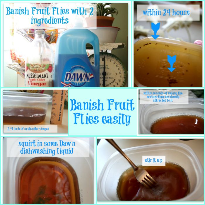 Banish Fruit Flies- I learned about this on How Clean Is Your House and it works amazingly well. Literally within seconds they went for it. They suggested using cling wrap on top and poking holes near the center to encourage entering but not exiting. Cruel but very effective!